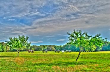 Shiloh N.M.P. (Peach Orchard)